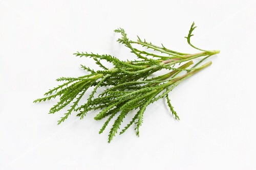 Olive herb (Santolina viridis) on a white surface