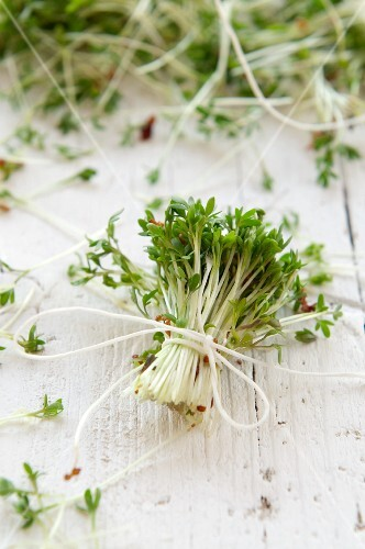 A bunch of fresh cress