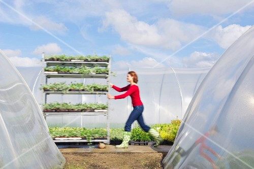 Woman pushing cart of plants outdoors