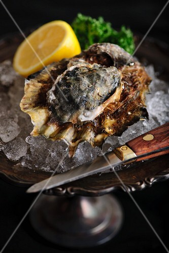 An oyster with a knife on ice