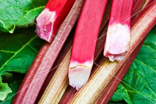 Fresh rhubarb and leaves