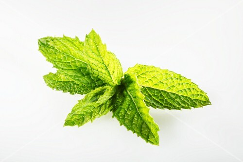 Kentucky Spearmint