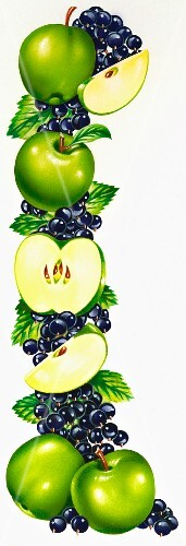 A vertical line of green apples and blackcurrants (illustration)