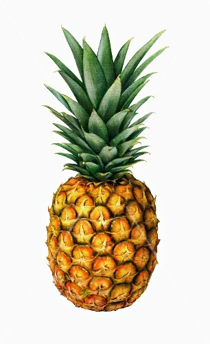 A whole pineapple with leaves (illustration)