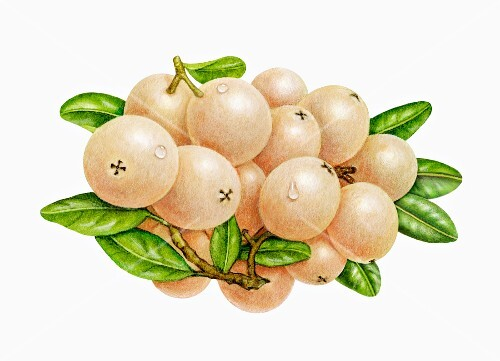 White cranberries with leaves (illustration)