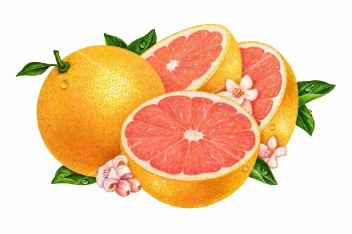 A group of pink grapefruits, flowers and leaves (illustration)