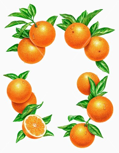A circle of oranges with leaves (illustration)