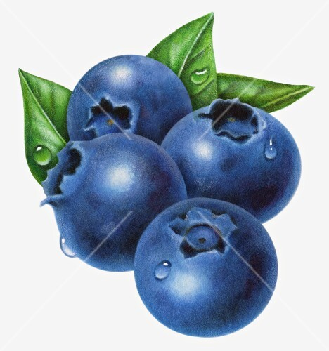Four wet blueberries with leaves (illustration)