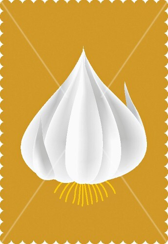 A garlic bulb (illustration)