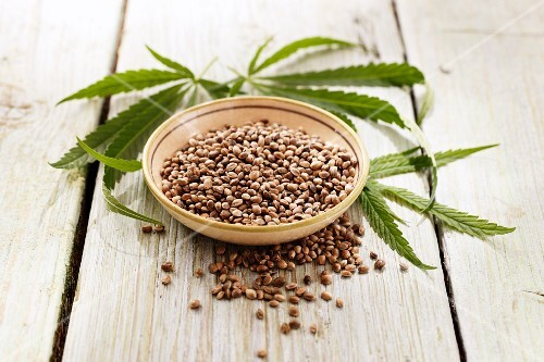 Hemp and hemp leaves