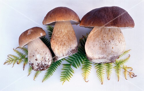 Three fresh porcini mushrooms on a fern leaf