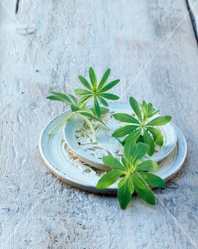 Fresh woodruff on a plate