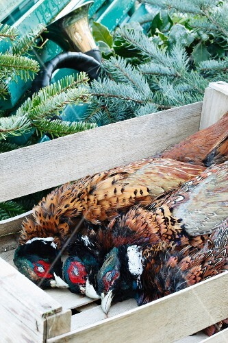 Pheasants in a crate