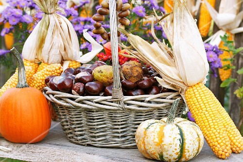 A basket of chestnuts, corn cobs and pumpkin