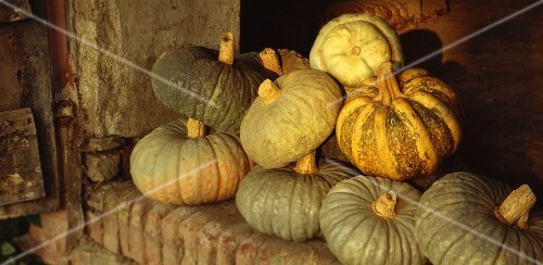 Stored squash fruits from Mantua