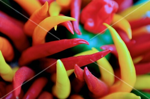 An assortment of colourful chilli peppers (close-up)
