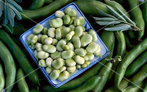 A plate of broad beans on top of bean pods
