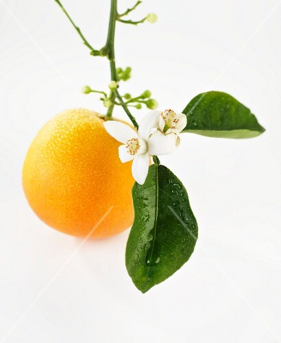 An orange with flowers hanging from the stem
