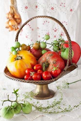 A Variety of Fresh Tomatoes in a Metal Basket