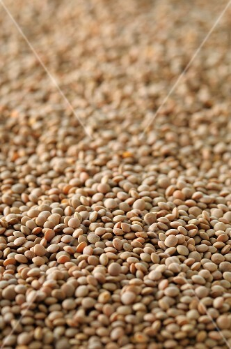 Lots of lentils (view from above)