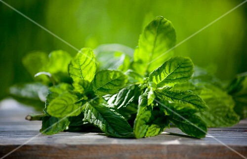 Fresh mint in the garden on a wooden board