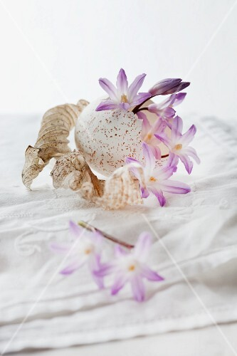 A still life featuring a scilla flower with turkey egg and hosta leaves on a white tablecloth
