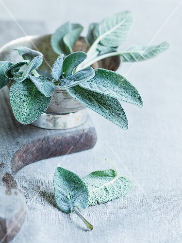 A sprig of sage in a silver bowl