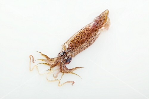 Squid on a white surface
