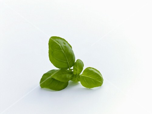 Basil leaves on a white surface