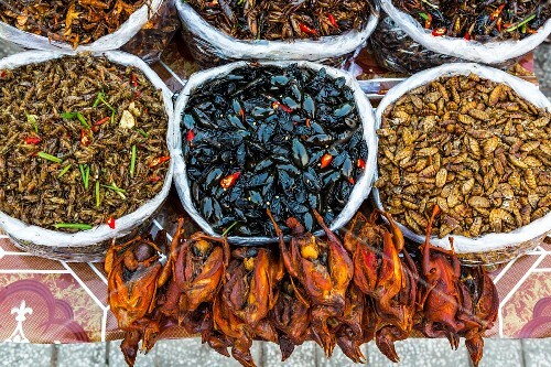 Deep fried insects and birds for sale from a street vendor, Phnom Penh, Cambodia