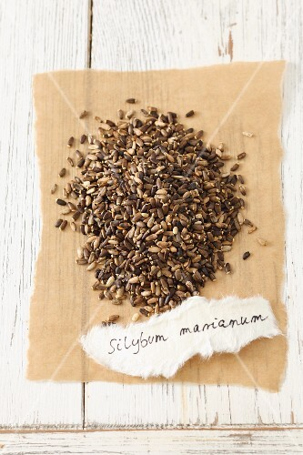 Milk thistle seeds (Silybum marianum)