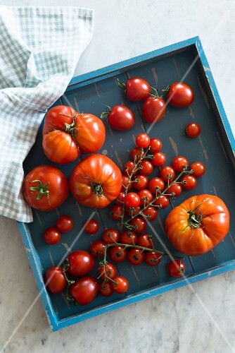 Assorted types of tomatoes in square blue box (view from above)