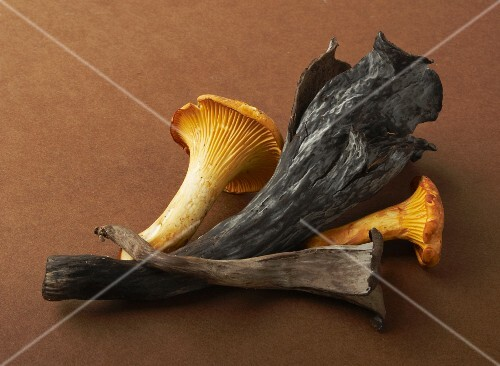 A chanterelle and a black chanterelle