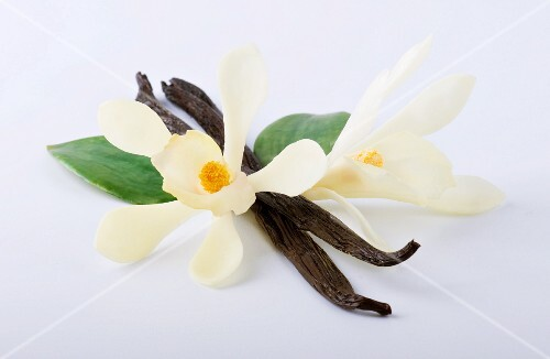 Two vanilla pods and two vanilla flowers
