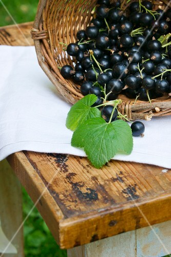 A basket of fresh blackcurrants on a wooden table outdoors