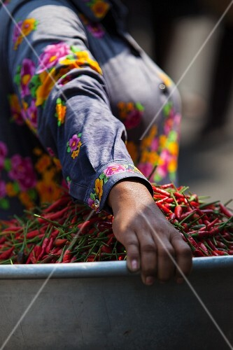 A woman carrying a basket of fresh chillies to market (Phnom Penh, Cambodia)