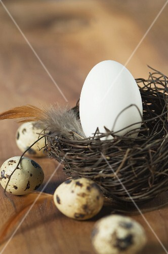 A white egg in an Easter nest, with quail's eggs to one side