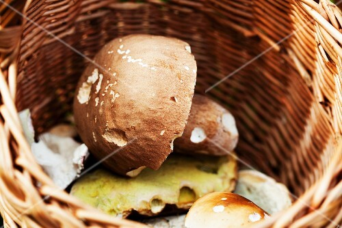 Fresh wild mushrooms in a basket (close-up)