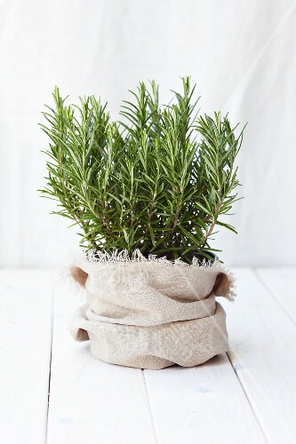 Rosemary in a jute sack