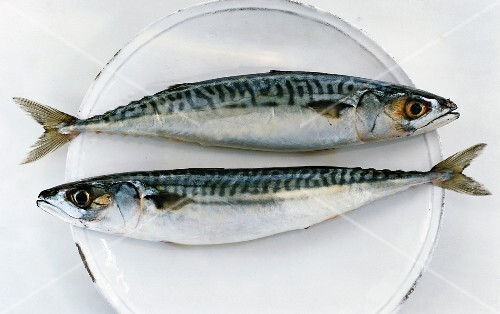 Two mackerel on a plate