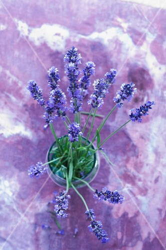 A bunch of lavender in a glass