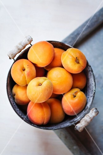 Apricots in an old zinc bucket
