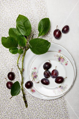 Plums with a twig and old plates on a cloth