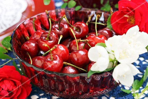 Cherries and white blossom in red glass dish