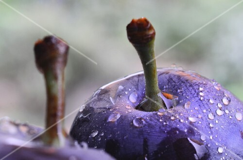 Plums with water droplets (detail)
