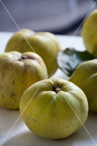 Freshly harvested quinces