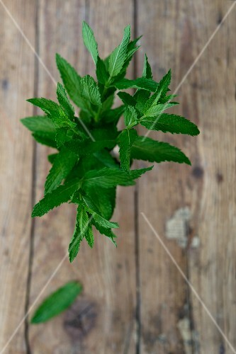 Fresh peppermint (Mentha piperita)