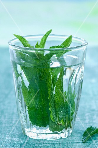 Peppermint (Mentha piperita) in a glass of water
