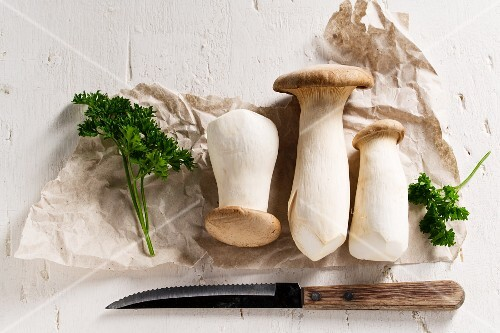 King trumpet mushrooms (Pleurotus eryngii) with parsley on packing paper, with a knife