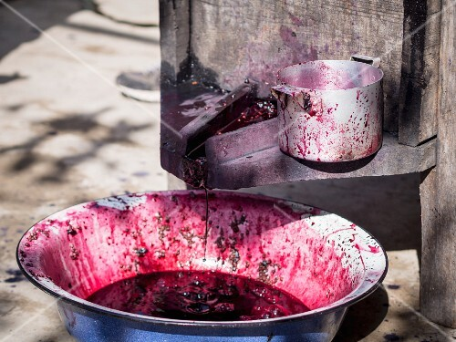 Traditional wine making - juice coming out from grapes crushed by feet.